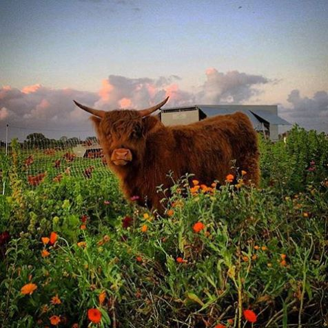 Spring-mornings-at-The-Farm.-springtime-thefarmbyronbay-flowers-thefarm-byron-byronbay-hairycoo-scot